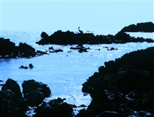 Pelican silhouetted in the bright sunglint