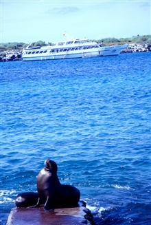 Cruise ship DELFIN II in the Galapagos.  Sea lions in the foreground.