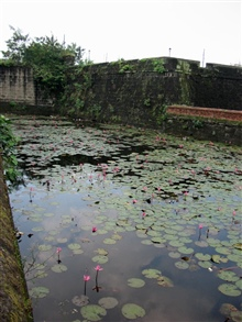 The lily pond of the inner fort of the Intramuros of Manila.