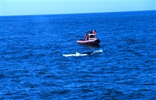 Pursuing whale to emplace dart for tissue sampling.Small boat work off the DELAWARE II.