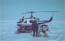 Brendan Kelley, University of Alaska, Fairbanks, conducting seal research on thefrozen Beaufort Sea north of Prudhoe. Clyde, the wonder dog, and Henrywere used to sniff out seal breathing holes.