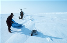Brendan Kelley preparing to capture a ring seal north of Prudhoe Bay on thefrozen Bering Sea.  Clyde the seal-breathing-hole-sniffingwonder dog is moving toward the NOAA Bell UH-1M helicopter.