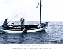 Angling for black sea bass at Santa Catalina Island.  Gaffing a 240-poundcapture.In: Sport Fishing in California and Florida,  by Charles F. Holder.Bulletin of the Bureau of Fisheries, Vol. XXVIII 1908, Part I, p. 207, Plate I.