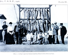 A day's sport at Santa Catalina Island with white sea bass.In: Sport Fishing in California and Florida,  by Charles F. Holder.Bulletin of the Bureau of Fisheries, Vol. XXVIII 1908, Part I, p. 207, Plate IV.