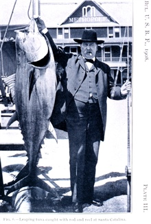 Leaping tuna caught with rod and reel at Santa Catalina.In: Sport Fishing in California and Florida,  by Charles F. Holder.Bulletin of the Bureau of Fisheries, Vol. XXVIII 1908, Part I, p. 207,Plate III.