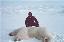 Helicopter pilot Budd Christman with sedated polar bear - Ursus maritimus.Bears were measured and tagged for future study.Outer Continental Shelf Environmental Assessment Program (OCSEAP) studies.