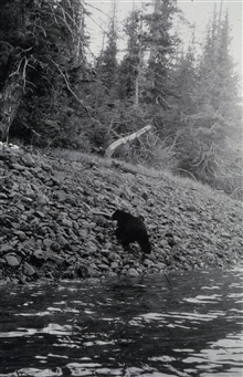 Black bear at triangulation station Patsy.