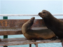 Sea lions on bench.
