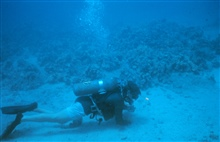 Benthic samples were taken to identify the speciesassociated with the artificial reef site.