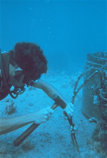 Small coral colonies were collected on pipe surfaces of know age todetermine growth rate of corals on the artificial reef.