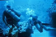Scuba divers on the reef.