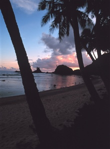 Sunset through the palm trees along the shores of American Samoa