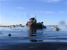 Diver Brian Wells preparing to dive in the kelp forest at Point Lobos StateReserve.