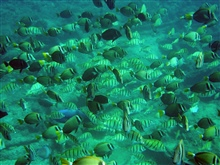 A profusion of reef fish