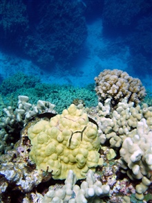 A beautiful coral assemblage overlooking a deep channel.