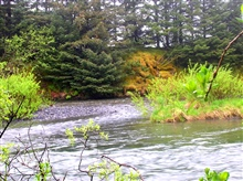 A moss-covered river bank.