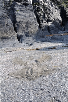 Intermixed gray and white rock fragments rounded by the action of surf on aKodiak beach. The rock has eroded from the everlasting pounding of the sea oncliffs of Kodiak Island.