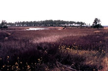 Grand Bay National Estuarine Research Reserve.High marsh near center of NERR, between Bayou Cumbest and Crooked Bayou.