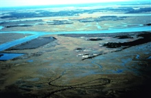 ACE Basin National Estuarine Research Reserve.  Aerial view of a portion of AsheIsland.