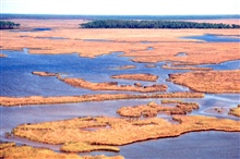 Grand Bay National Estuarine Research Reserve.Rigolets in foreground, with maritime forest island on Crooked Bayou in background.   LSU aerial shoreline survey of October 1998.