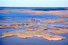 Grand Bay National Estuarine Research Reserve.North showing portion of NERR, including dendritic shallow bayous and maritime forest islands.  LSU aerial shoreline survey of October 1998.