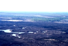Grand Bay National Estuarine Research Reserve.West from eastern side of reserve showing marsh/forest ecotone. LSU aerial shoreline survey of October 1998.