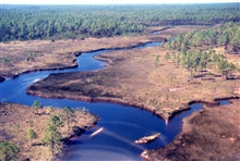 Grand Bay National Estuarine Research Reserve.Bayou Heron Alligator Alley northward adjacent to MS/AL state line progressing into maritime slash pine flatwoods/savanna habitat -eastern border of NERR. LSU aerial shoreline survey of October 1998.