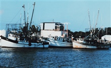 Shrimp boats at Cameron
