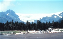 Driftwood, tree line, mountains and glacier