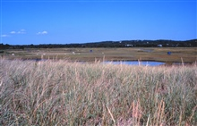 Great Sippewissett Marsh, West Falmouth