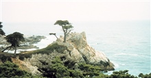 Cypress Point - a world famous landmark on 17 Mile Drive.