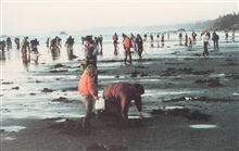 Clamming season opens on the Oregon coast.
