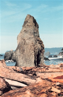 Pinnacle rocks and weather-beaten logs - trademarks of the Oregon coast.