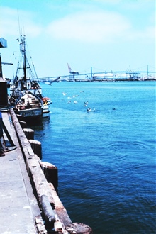 The Fishing Vessel VITO unloads anchovy at Fishermen's Terminal