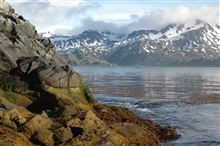 Kelp forest, calm water and spectacular mountain scenery