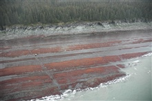 Aerial photograph. Differentially eroded sedimentary layers show linear ridgesparallel to the shoreline with tidal channels cutting perpendicular channels.The red is seaweed (algae).