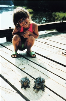 Juvenile human inspecting juvenile alligator snapping turtles.