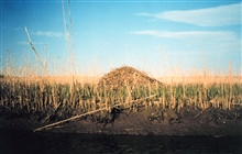 A muskrat hut in a middle Patuxent river marsh.  Observed at a very low tide.Early in the year so marsh grasses aren't too tall yet.