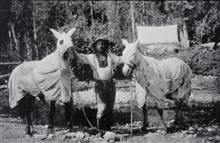 Horses and man covered for mosquitoes.141st Meridian Survey.