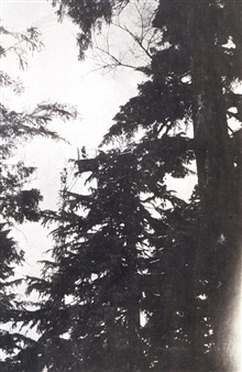 Platform and stand built between two trees on Olympic Peninsula.Note man standing on platform.Triangulation party of H. A. Seran