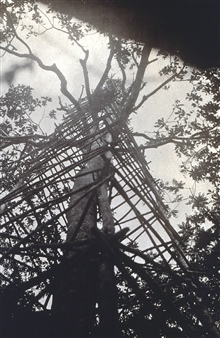 Another view of tower built around a tree on Sarangani Island