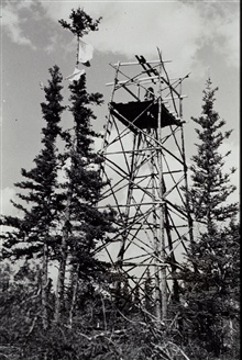 Pole tower built from native timber at Takhini West Base.Note signal flag on tree.Triangulation party of F. B. Quinn