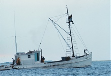 A menhaden fishing vessel with a lookout in the crow's nest looking forindications of schools of menhaden
