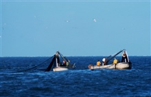 Purse seine boats setting nets to capture school of menhaden