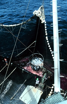 The net is now on board and the operation of collecting the fish has begun.The large basket is dipped repeatedly into the water to bring the fish on tothe boat.