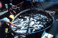 A basket load of fish on board.