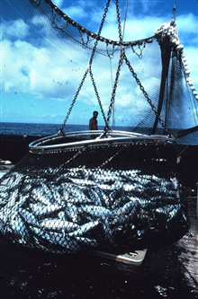 The basket load of fish is now directly over the hole that leads to thefreezer compartments.
