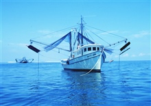 A double rigged shrimp trawler with nets and otterboards hanging outboard.Vessel is at anchor.