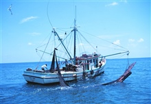 Double-rigged shrimp trawler with bag of one net on board