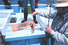 Happy angler displays small sculpin aboard charter (CPFV) vessel